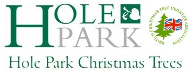 Hole Park Christmas Trees, Rolvenden Kent.